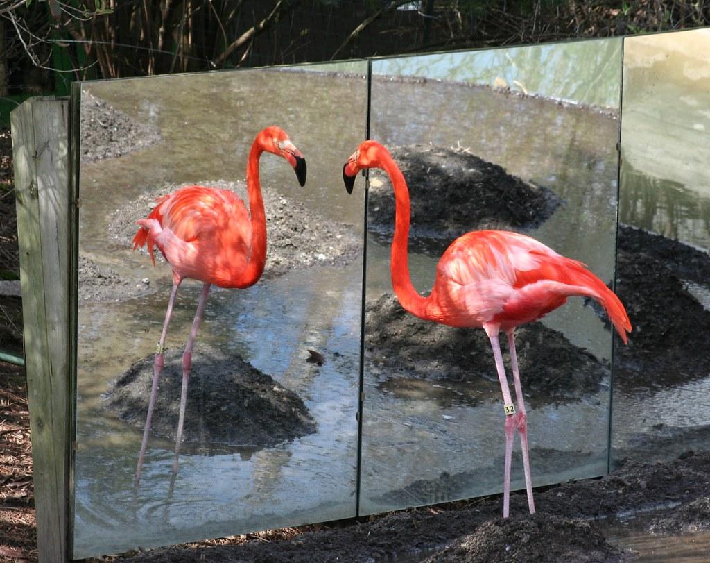 Zoo Zoo Mirror Room Door Escape Walkthrough