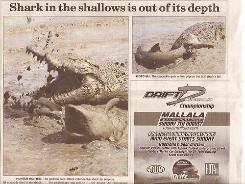 Bull Shark Vs. Saltwater Crocodile   A Saltwater Crocodile s ...