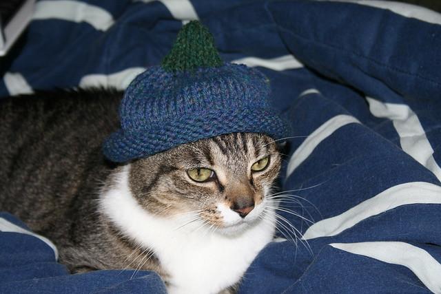 Cats Hats And Bats Major
