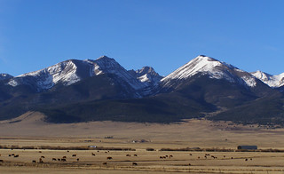 Cattle grazing, Colorado 14ers, eastern Sangre de Cristos | by dherrera_96