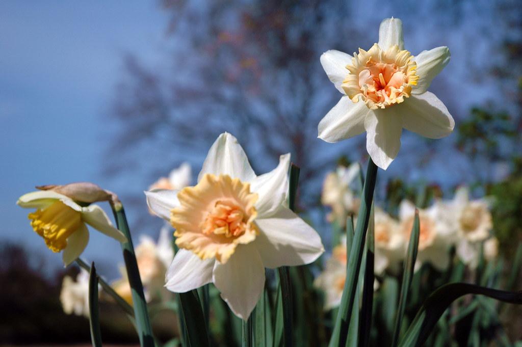 Eb white s spring april 1941