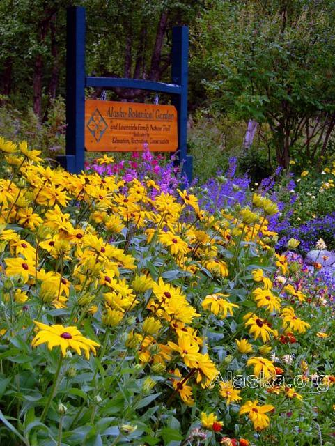 Alaska Botanical Gardens Anchorage Flowers