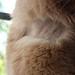 Shaved neck