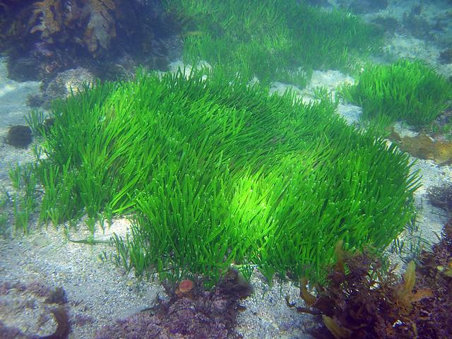 Pretty Green Sea Grass Ooooh Pure Greeeeeeeeeen Flickr