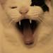 打哈欠 - major yawn