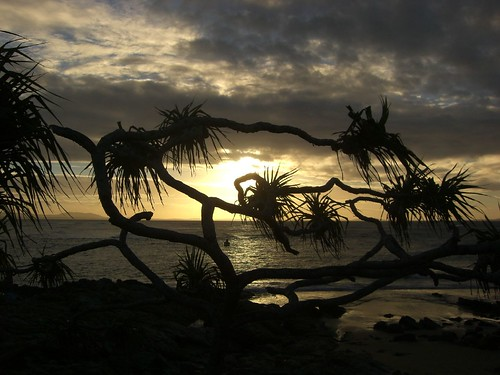 Sunset Through Tree! | by Pat Scullion