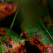 Fire Opal leaves