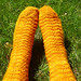 Marigolds in the grass 2
