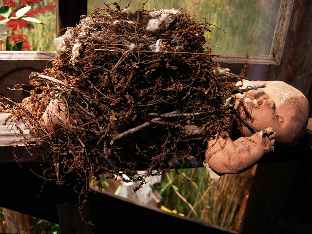 Bird's Nest - Mississippi Museum of Natural Science | Flickr