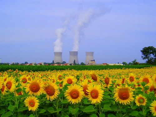 Sunflowers and nuclear power | by Jess & Peter Gardner