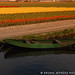 The tulip canal