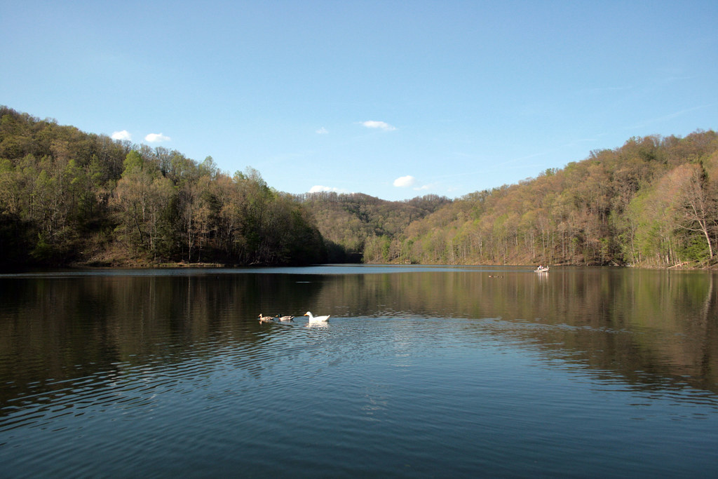 Fish pond lake in letcher county kentucky fish pond for Freshwater pond fish