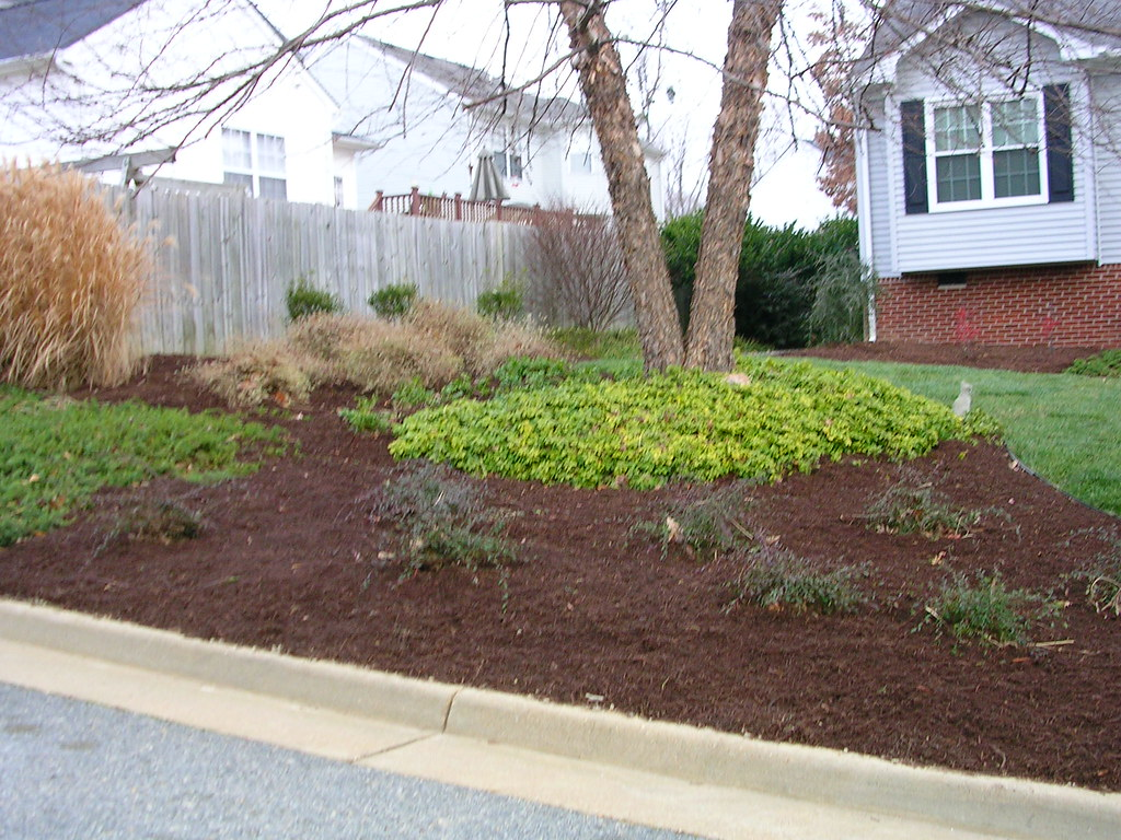 Curb View of Landscaping- December | The river birch and ...