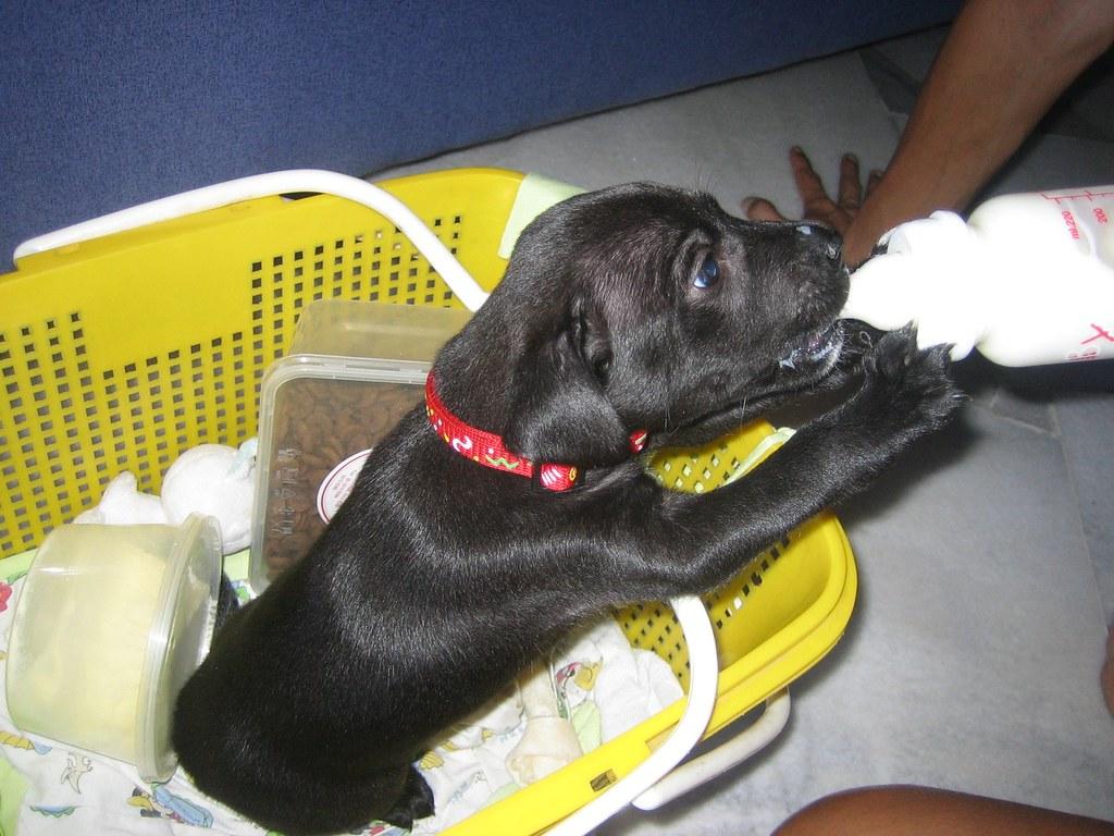 Dog Puking Black Liquid