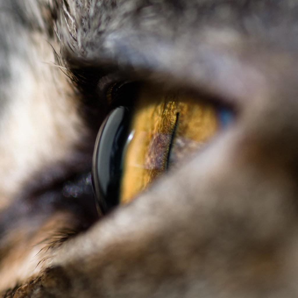 Natural Eye Treatment