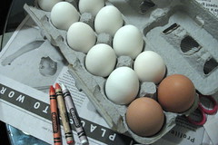 our eggs | by K. B. R.