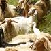 sheep and birdj P1160751