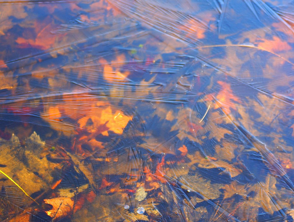 Leaves beneath the ice of Walden Pond. Photo by Flickr user Bemep, CC BY-NC 2.0