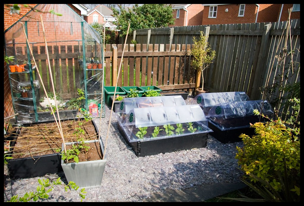 garden allotment i 39 ve been growing edible stuff in my gard flickr. Black Bedroom Furniture Sets. Home Design Ideas