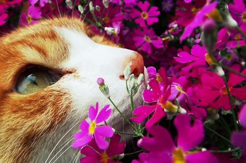 Can Cats Get Swine Flu
