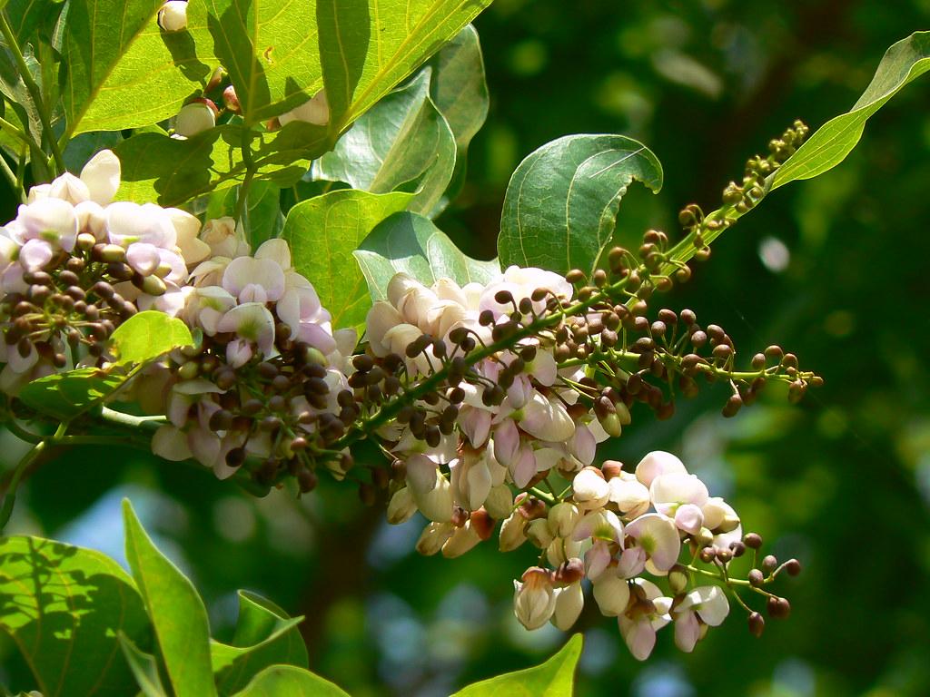 Botanical Nut Family Tree – Frases e mensagens