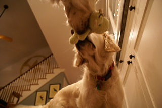 Sailor and Frisket disagreed on the disposition of a toy | by epc