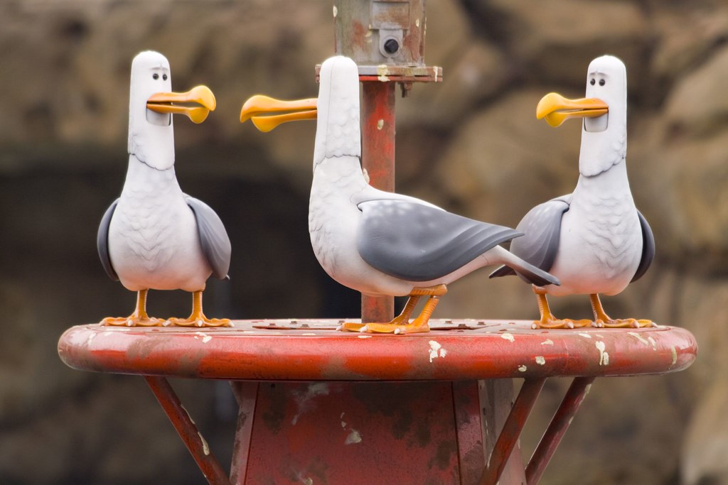 finding nemo s seagulls photographed at the new finding ne flickr