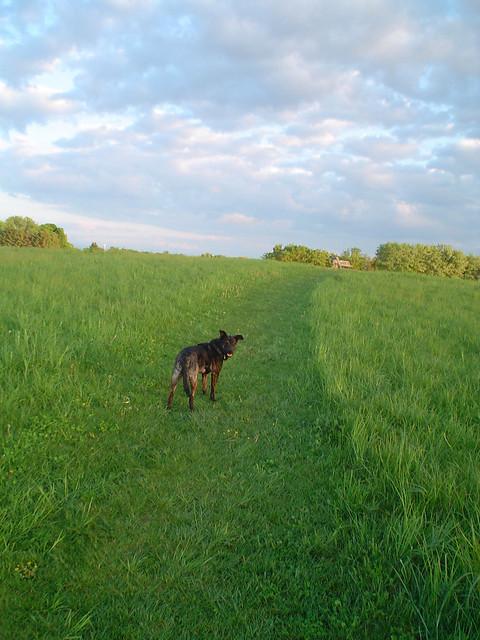 Token Creek Dog Park Hours