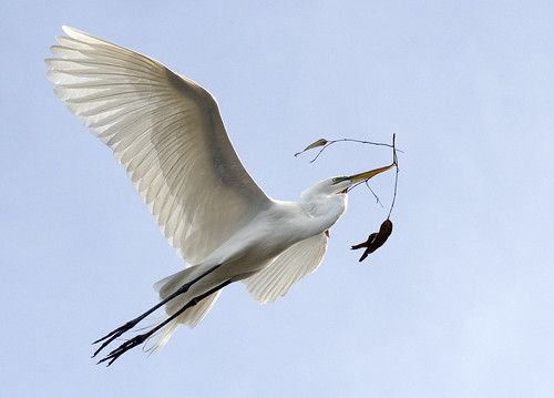 Egret | by Immortal Penguin