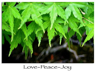 Love-Peace-Joy | by Randy Son Of Robert