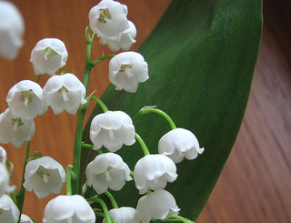 Lily of the Valley | by ann j p