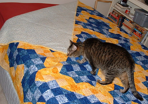 Suzie inspects the quilt. | by Christina