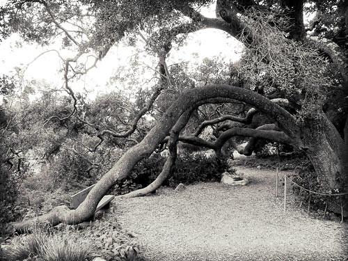 ... Santa Barbara Botanical Gardens | By Twinmama