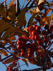 berries1 | by Nicky Perryman