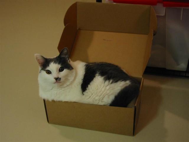 Funny Cat Box Maru