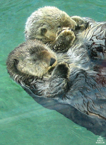 Sea Otters | by _kdot