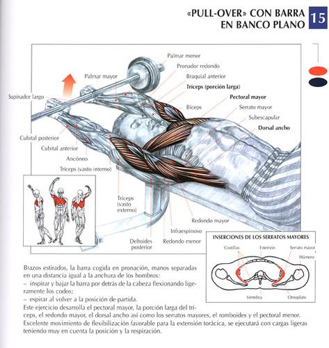 Ejercicios espalda espalda pull over con barra en banco for Ejercicios de gym