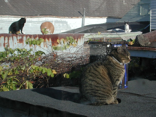 Rooftop Society of Cats | by Editor B