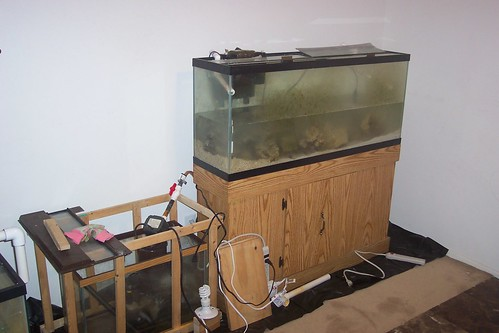 Saltwater aquarium setup | Here it is! It's sitting on ...