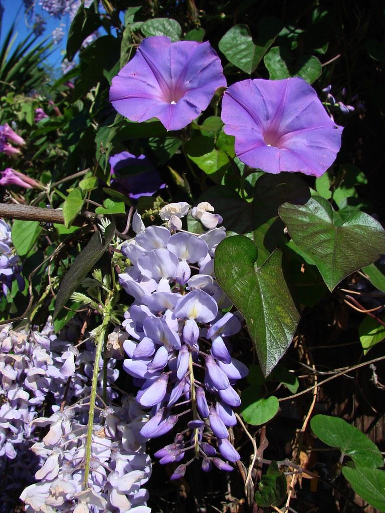 purple on lavender