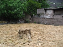 Basketball courts - ALSO great for drying hay.
