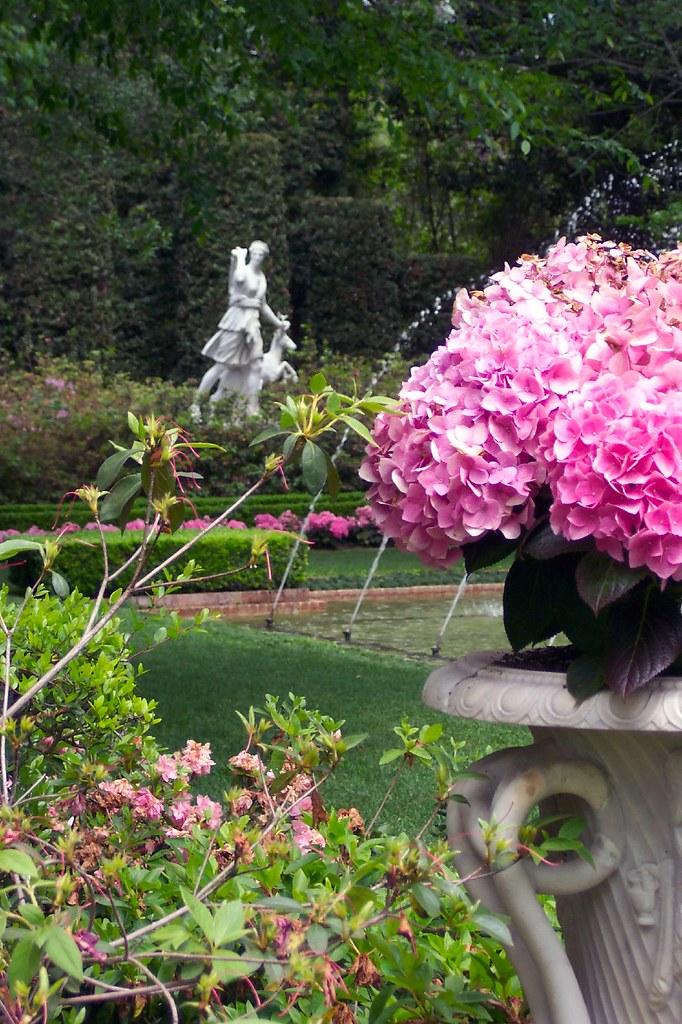 Bayou Bend Gardens Hydrangea In Their Urn With Diana