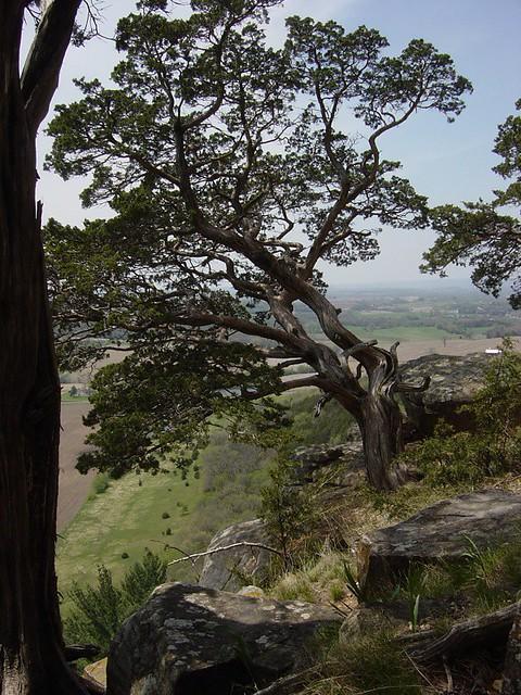 tree on a cliff taken near lodi wisconsin bitterroot