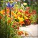 Thou shall not covet thy neighbor's garden