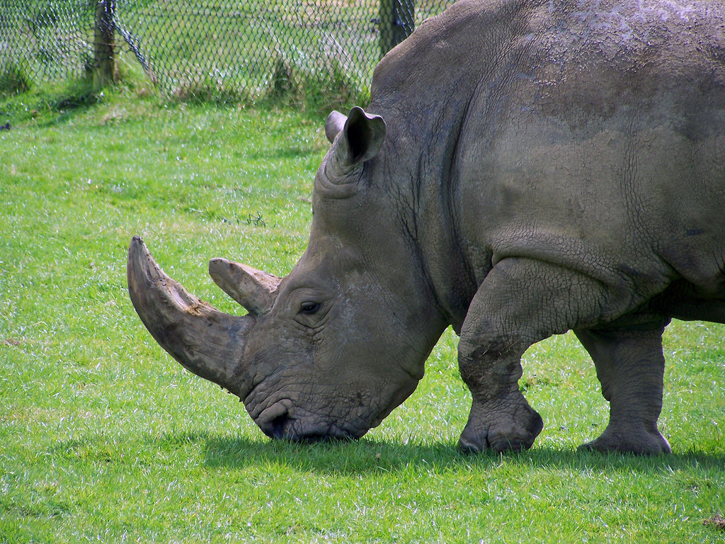 A Group Of Rhinos Is Called 92