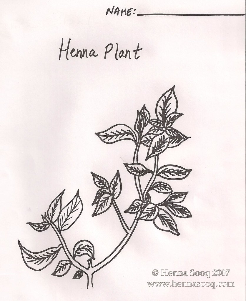 Henna Plant Coloring Page Free Coloring Page Of The Henna Flickr