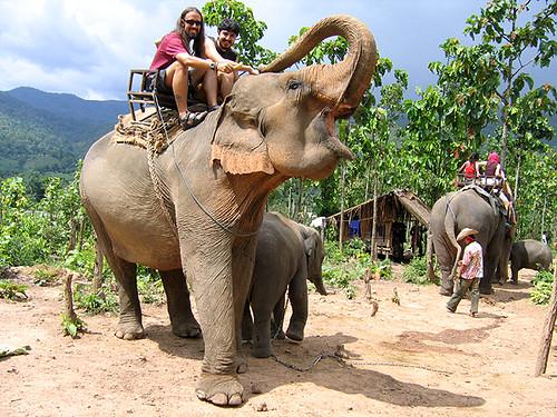 De turismo responsable y elefantes Carlitopolis en Tailandia