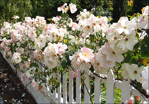 rosefence | by jacquiscloset