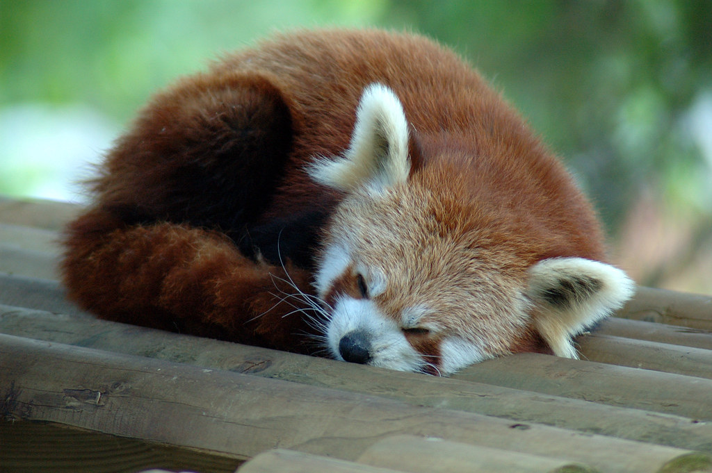 Image Result For Cute Baby Fox