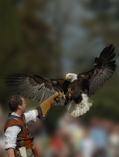 Man vs Bald Eagle | by Tom Thorpe